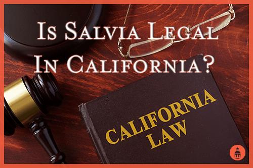 is salvia legal in california
